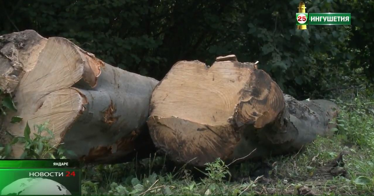 Незаконная вырубка леса наказуема .